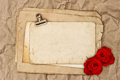 Old blank paper and two rose flowers Royalty Free Stock Image