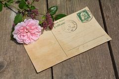 Old blank vintage postcard with old stamp is on old wood with pink rose and nib Stock Photos