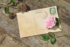 Old blank vintage postcard with old stamp is on old wood with pink rose and nib Stock Photography
