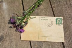 Old blank vintage postcard with old stamp is on old wood with pink rose and nib Stock Image
