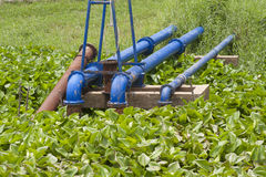Old Blue pump pipe and water hyacinth Royalty Free Stock Images