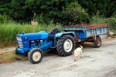 Vintage Blue Tractor and Trailer and a White Dog. An old blue vintage diesel tractor and battered and rusted farm trailer parked on dirt road in rural area, with Stock Images