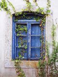 Old blue window. Weathered old blue window, with ivy Stock Image