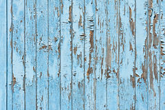 Old blue wood plank background. Royalty Free Stock Photo