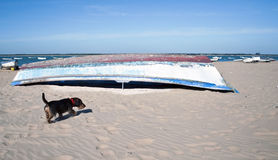 An old boat with a dog. An old boat overturned on the sand next to a dog with the ocean in the background Stock Photo