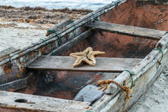 Old boat with starfish. A weathered old fishing boat on the shore with a starfish skeleton in it stock photos