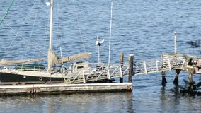 Old boats floating in the water with a metal dock. Old boats floating in the water with an old metal dock stock video