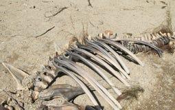 Old bones Stock Images