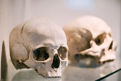 Old Bones And Skulls Stock Photo