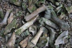 old bones in the wild nature Stock Photo