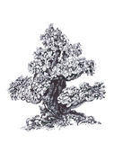 Old bonsai in the wind. Pen drawing. Illustration of  wood Stock Photography
