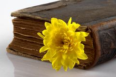 Old book. Picture of a old book and flower Royalty Free Stock Photos