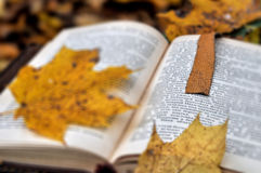 Old book in autumn park Royalty Free Stock Image