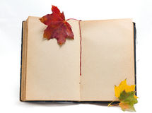 The old book  with blank pages. The old (ancient) book with blank pages and vivid autumn maple leaves Royalty Free Stock Photography