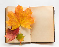 The old book  with blank pages. The old ancient book with blank pages and vivid autumn maple leaves Royalty Free Stock Images