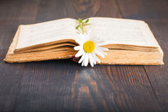 Old book and daisies flower Stock Photography