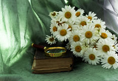 Old book and daisies Royalty Free Stock Photo