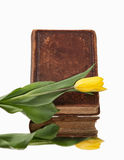 Old book and flower on white background Royalty Free Stock Photo