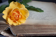 Old book and fresh rose royalty free stock photography