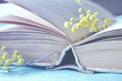 Old book on the table with little mimosa branches - spring still life in pastel tones. Spring still life - closeup of open old book with yellow mimosa flowers royalty free stock photography