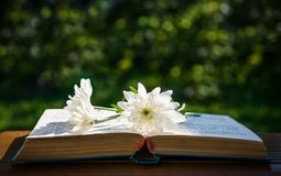White chrysanthemums and an old book Stock Image