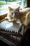 Old Books Cat Stock Image