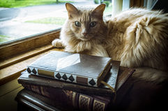 Old Books Cat Royalty Free Stock Photography