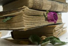 Old books in library. A bookmark in the old book from a dry red rose Stock Photography