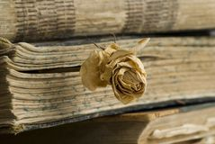 Old books in library. A bookmark in the old book from a dry rose Royalty Free Stock Image