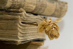 Old books in library. A bookmark in the old book from a dry rose Royalty Free Stock Images