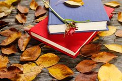 Old books with vintage clock among autumn leaves and bright natural sunlight - autumn still life, focus at the clock and stock photos