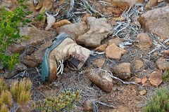 Old Boot. Torn hiking boot abandoned on the trail Royalty Free Stock Photos