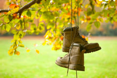 Old boots in autumn. Old worn boots hanging on a tree in an autumn forest Royalty Free Stock Image