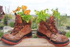 Old boots with flowers Royalty Free Stock Images