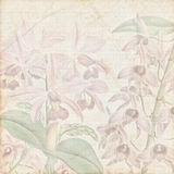 Old botanic paper texture Royalty Free Stock Photography