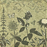 Old botanical background. Vintage background with a botanical theme and ornaments stock illustration