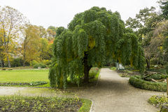Old botanical garden. In Croatian capital Zagreb in the autumn time stock image