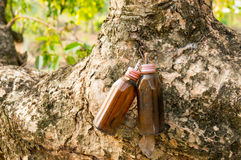 Old bottle lamp hanging on an old tree Royalty Free Stock Photos