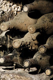 Old bottles in a cellar. Covered with dust and cobwebs Royalty Free Stock Photo