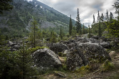Old boulders in the wild forest Royalty Free Stock Image