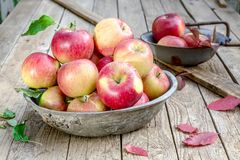 An old bowl of apples on a wooden table Royalty Free Stock Photos