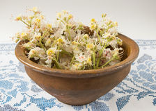 Old bowl with flowers chestnuts Royalty Free Stock Image