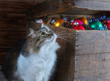 Old box with Christmas decorations and a cat. An old box with Christmas decorations and a cat stock image