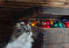 An old box with Christmas decorations and a cat.  stock photography