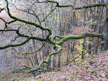 Old branch covered with moss Stock Image