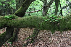 Old branch covered by moss and plants Stock Photos