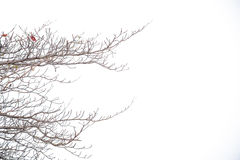 Old branch no leave tree outdoor background. Isolated Stock Photo