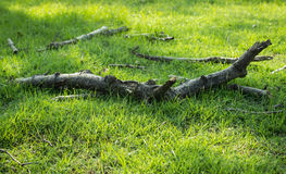 Old branches Royalty Free Stock Photo