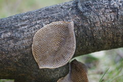 Old branches of mushrooms Stock Photo