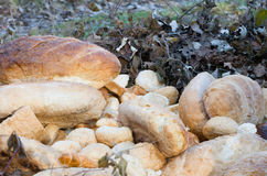 Old Breads in the Nature Closeup Royalty Free Stock Image